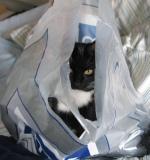 Sili in a bag