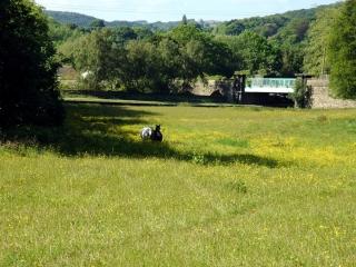 horses-field-4