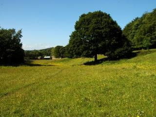 horses-field