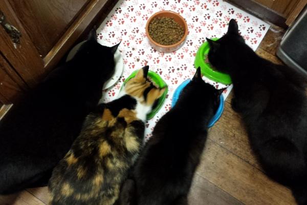 kitty-breakfast