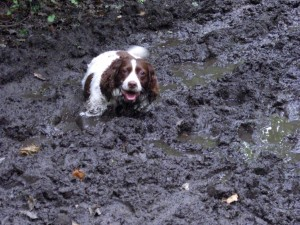 lily-mud