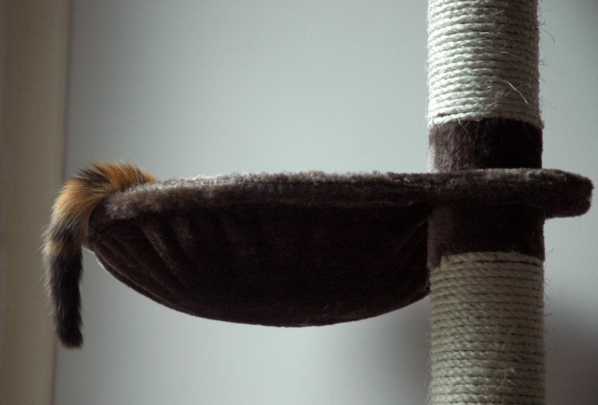 strange-tail-july-2013-sm